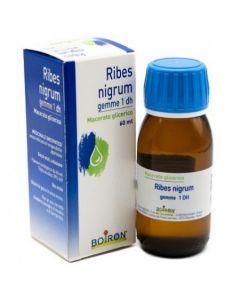 Laboratoires Boiron Ribes Nigrum Gemme Mg 60ml